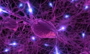 neurons-300x181
